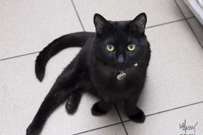 Lucifer The Cat Can't Walk, But That Doesn't Stop Him From Helping Other Sick Animals