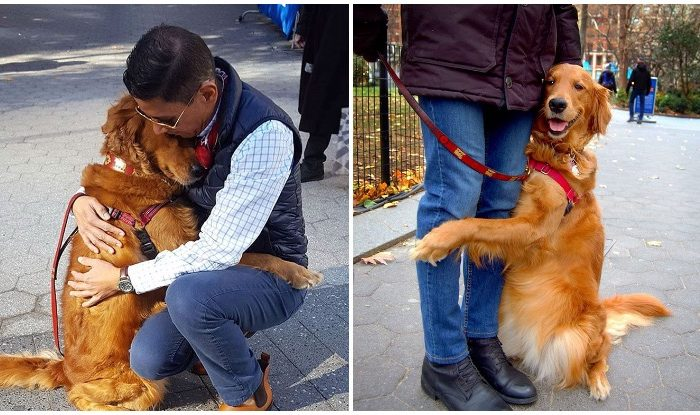 This Golden Retriever Is Obsessed With Giving Hugs To People