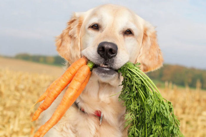 Is It Ok For Your Dog To Be Vegetarian Or Even Vegan?