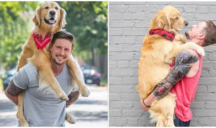 Golden Retriever Goes Viral For Jumping In His Owner's Arms Whenever He Sees Him