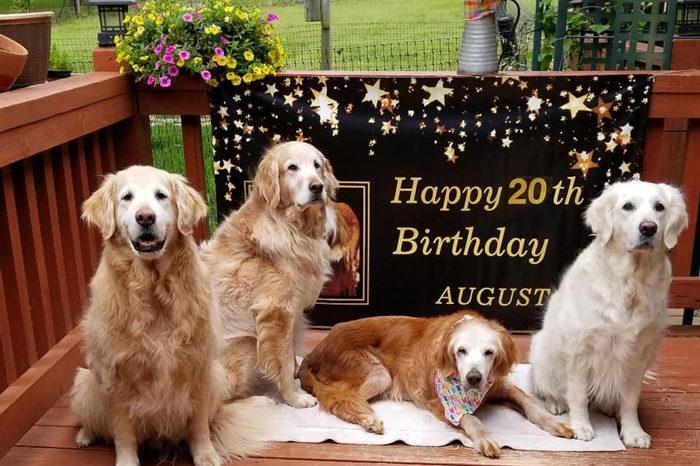 This Golden Retriever Celebrated 20th Birthday