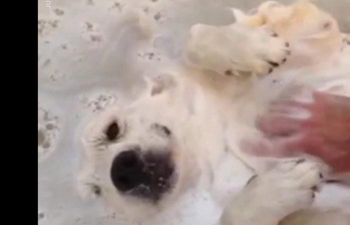 Casper just loves taking bubble baths