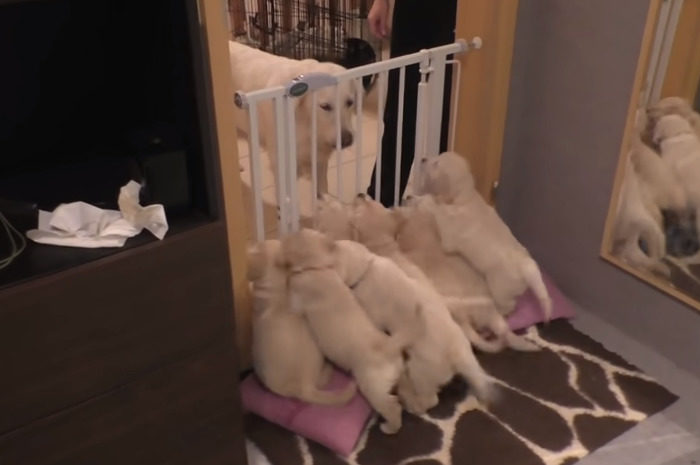 Mom just knows how to handle her puppies: This will take your breath away...