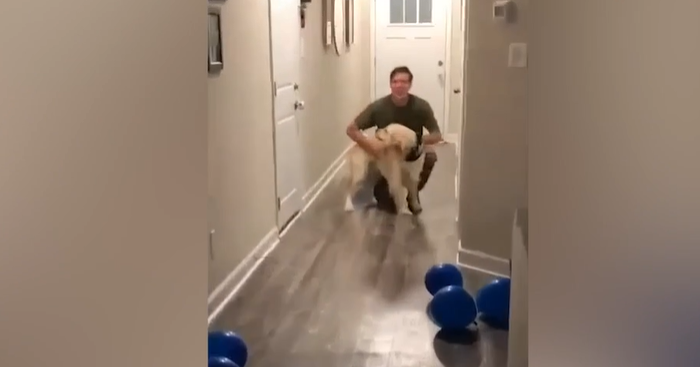 A Warm Welcome From Golden Retriever After His Owner Was Absent For Four Months Will Melt Your Heart